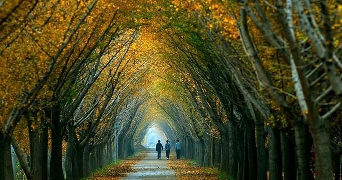"""南京梧桐树 梧桐树是南京重要的""""城市名片""""。枝繁叶茂的梧桐树既是南京靓丽的风景,也是南京人对这座城市归属的精神寄托,更是这座城市的灵魂。树是梧桐树,城是南京城。 """"老南京""""难舍""""什锦菜"""" 南京菜一向称为京苏大菜,盐水鸭、麻辣小龙虾、鸭血粉丝汤等特色美食广为人知、并颇受好评。但有一道南京人过年必备的餐桌美食,并不被外地人熟知,却一直印刻在赵蕊蕊内心深处。 她讲述到:""""我相信每一个南京人都知道什锦菜,是过年必做的一道菜。过年"""