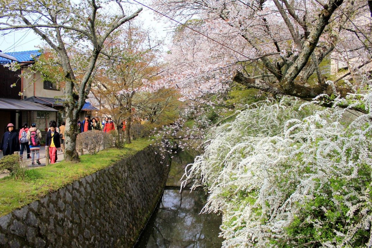 凤凰旅游直播预告:又到日本樱花季?美女主播带