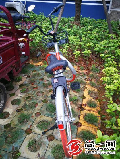 被盗窃的共享单车。尚一网记者 李博 摄