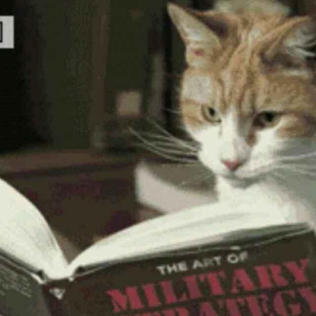壁纸 动物 猫 猫咪 小猫 桌面 640_640