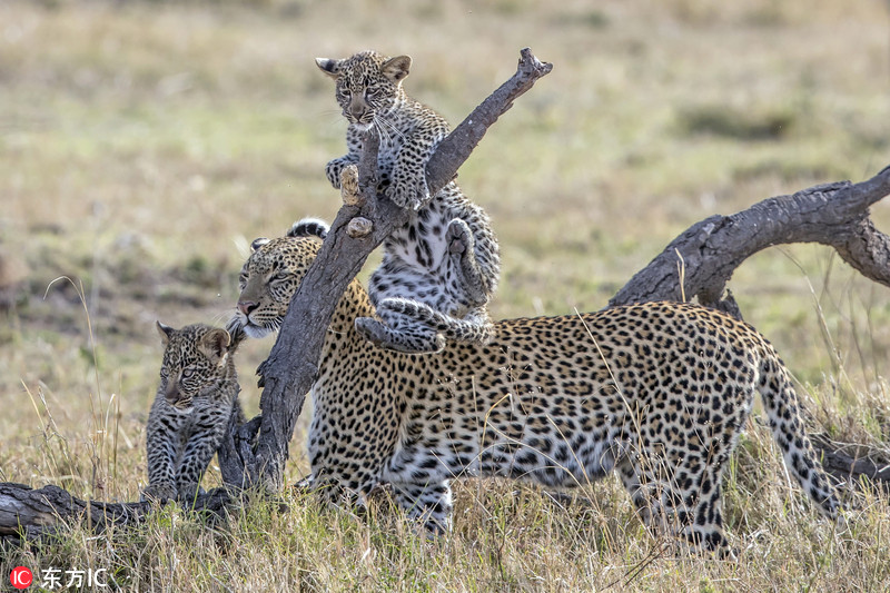 世界野生物日:摄影师拍动物呼吁保护