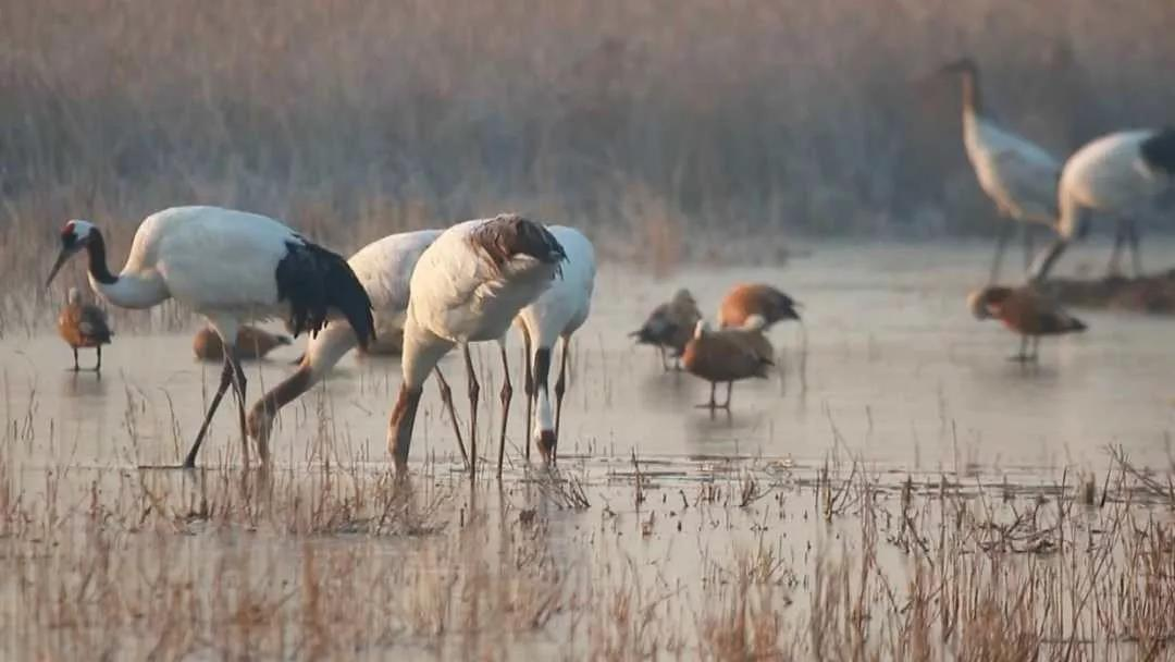 第43届联合国教科文组织世界遗产委员会会议(世界遗产大会)5日在阿塞拜疆巴库举行,会议审议通过将中国黄(渤)海候鸟栖息地(第一期)列入世界自然遗产名录。来源:人民日报