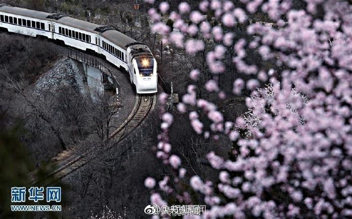 """""""開往春天的列車""""人滿為患 因穿越花海可賞景"""