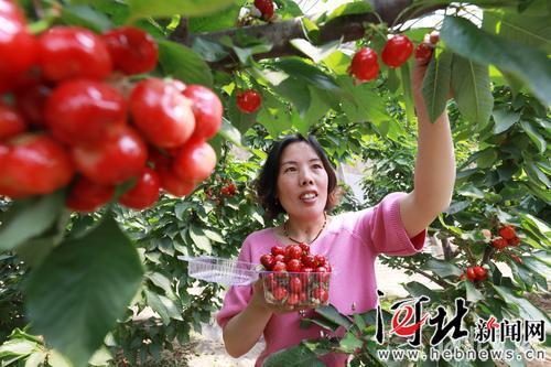 """河北大名县农产品抢搭""""618网购车"""""""