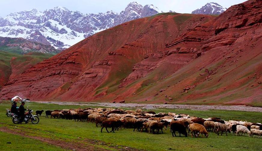 新疆高海拔山区牧民夏季转场