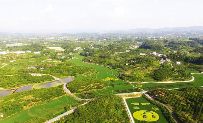 重庆忠县:彩色稻田扮靓美丽乡村